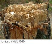 Купить «Срубленное дерево», фото № 485046, снято 6 сентября 2008 г. (c) Светлана Черненко / Фотобанк Лори