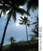 Купить «Пальмы», фото № 487922, снято 13 февраля 2007 г. (c) Артём Дудкин / Фотобанк Лори