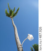 Купить «Фонарь на пальме», фото № 487926, снято 10 февраля 2008 г. (c) Артём Дудкин / Фотобанк Лори