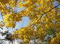 Осенние листья на фоне неба, фото № 488034, снято 1 октября 2008 г. (c) Кристина Викулова / Фотобанк Лори
