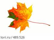 Купить «Кленовый лист», фото № 489526, снято 19 сентября 2018 г. (c) ElenArt / Фотобанк Лори