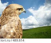 Купить «Хищная птица», фото № 489814, снято 31 мая 2008 г. (c) Карелин Д.А. / Фотобанк Лори