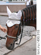 Купить «Лошадь», фото № 490918, снято 18 августа 2007 г. (c) Александр Секретарев / Фотобанк Лори