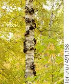 Купить «Осень в лесу», фото № 491158, снято 27 сентября 2008 г. (c) djandre77 / Фотобанк Лори