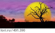 Купить «Дерево на фоне солнца», фото № 491390, снято 29 июня 2008 г. (c) Александр Ерёмин / Фотобанк Лори