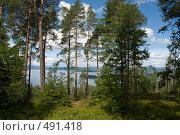Сосновый лес, Норвегия (2008 год). Стоковое фото, фотограф Ярослав Никитин / Фотобанк Лори
