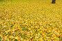 Осенний фон, эксклюзивное фото № 494442, снято 4 октября 2008 г. (c) Александр Алексеев / Фотобанк Лори