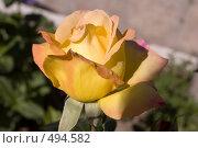 Купить «Бутон розы Gloria Day», фото № 494582, снято 19 августа 2008 г. (c) Константин Чевелёв / Фотобанк Лори