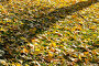 Осенние тени. Фон, эксклюзивное фото № 494682, снято 5 октября 2008 г. (c) Александр Алексеев / Фотобанк Лори