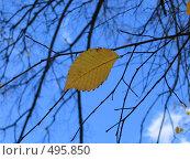Купить «Осенний лист на фоне неба», фото № 495850, снято 5 октября 2008 г. (c) Юрий Винокуров / Фотобанк Лори