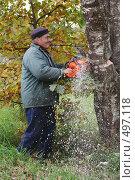 Купить «Мужчина пилит березу на дрова», фото № 497118, снято 4 октября 2008 г. (c) Галина Ермолаева / Фотобанк Лори