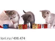Купить «Котята играют на белом фоне», фото № 498474, снято 20 сентября 2008 г. (c) Cветлана Гладкова / Фотобанк Лори