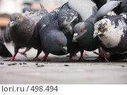 Голуби. Стоковое фото, фотограф Людмила Гетманова / Фотобанк Лори