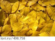 Ковёр из осенних листьев. Стоковое фото, фотограф Зябрикова Надежда / Фотобанк Лори