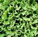 Фон из листьев зеленого салата, фото № 499070, снято 8 июля 2007 г. (c) A Челмодеев / Фотобанк Лори