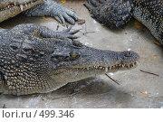 Крокодил (2008 год). Стоковое фото, фотограф Сергей Анисимов / Фотобанк Лори