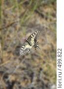 Купить «Бабочка на траве», фото № 499822, снято 17 сентября 2008 г. (c) Игорь Муртазин / Фотобанк Лори