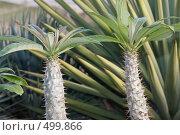 Купить «Колючее растение», эксклюзивное фото № 499866, снято 30 апреля 2008 г. (c) Дмитрий Неумоин / Фотобанк Лори