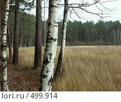 Купить «Природа осенью», фото № 499914, снято 27 октября 2004 г. (c) Сергей Бехтерев / Фотобанк Лори
