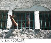 Купить «Орангутанг за решеткой», фото № 500274, снято 15 февраля 2007 г. (c) Артём Дудкин / Фотобанк Лори