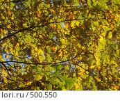 Купить «Листва», фото № 500550, снято 5 октября 2008 г. (c) Алешина Екатерина / Фотобанк Лори
