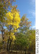 Купить «Осенний лес», фото № 501250, снято 3 октября 2008 г. (c) Александр Башкатов / Фотобанк Лори