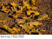 Купить «Маленькая осень», фото № 502550, снято 3 октября 2008 г. (c) Антон Голубков / Фотобанк Лори