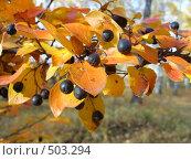 Осень. Стоковое фото, фотограф Нина Галкина / Фотобанк Лори