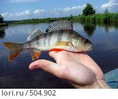 Купить «Окунь», фото № 504902, снято 13 июля 2008 г. (c) Алексей Алексеев / Фотобанк Лори