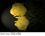 Купить «Две жёлтые розы на траурном фоне», фото № 505658, снято 4 октября 2008 г. (c) Кардаполова Наталья / Фотобанк Лори