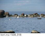 Лебеди.Финский залив. Стоковое фото, фотограф Алла Виноградова / Фотобанк Лори