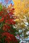 Осенние краски, фото № 509214, снято 28 сентября 2008 г. (c) Михаил Коханчиков / Фотобанк Лори