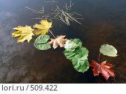 Композиция из осенних листьев на воде. Стоковое фото, фотограф Зябрикова Надежда / Фотобанк Лори