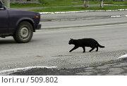 Чёрная кошка переходит дорогу. Стоковое фото, фотограф Дмитрий Лемешко / Фотобанк Лори
