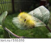 Лохматая гусеница. Стоковое фото, фотограф Владимир Соловьев / Фотобанк Лори