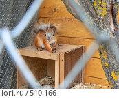 Белка в клетке. Стоковое фото, фотограф Олеся Шувалова / Фотобанк Лори