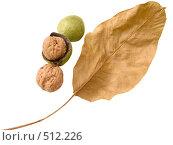 Купить «Лесной орех и лист», фото № 512226, снято 30 сентября 2008 г. (c) Анатолий Заводсков / Фотобанк Лори