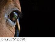 Купить «Глаз лошади крупным планом», фото № 512690, снято 21 июня 2008 г. (c) Алексей Крылов / Фотобанк Лори