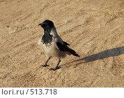 Купить «Ворона с кривым клювом», эксклюзивное фото № 513718, снято 19 октября 2008 г. (c) lana1501 / Фотобанк Лори
