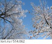 Купить «Заснеженные деревья на фоне неба», фото № 514062, снято 17 февраля 2007 г. (c) Yevgeniy Zateychuk / Фотобанк Лори