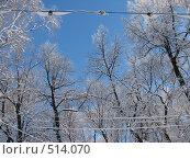 Купить «Заснеженные лампы, провода и ветки деревьев», фото № 514070, снято 17 февраля 2007 г. (c) Yevgeniy Zateychuk / Фотобанк Лори
