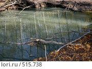 Осенний водоём. Стоковое фото, фотограф Александр Бутенко / Фотобанк Лори