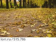 Купить «Осень, листопад, крупный план», фото № 515786, снято 4 октября 2008 г. (c) Роман Коротаев / Фотобанк Лори