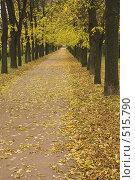 Купить «Осень, листопад», фото № 515790, снято 4 октября 2008 г. (c) Роман Коротаев / Фотобанк Лори