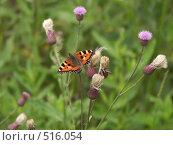 Бабочка в русском поле, фото № 516054, снято 18 июля 2004 г. (c) Сергей Бехтерев / Фотобанк Лори