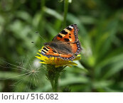 Бабочка на желтеньком цветочке, фото № 516082, снято 27 августа 2004 г. (c) Сергей Бехтерев / Фотобанк Лори