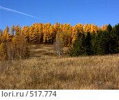 Купить «Осенний лес», фото № 517774, снято 3 октября 2008 г. (c) Куприянов Евгений / Фотобанк Лори