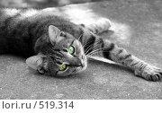 Кошка. Стоковое фото, фотограф Антон Коршунов / Фотобанк Лори
