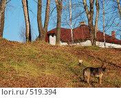 Осень. Стоковое фото, фотограф Ася Вострокнутова / Фотобанк Лори