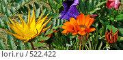 Купить «Желтый и оранжевый цветок», фото № 522422, снято 23 августа 2008 г. (c) Глеб Тропин / Фотобанк Лори